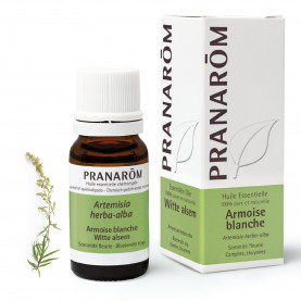 Armoise blanche - 10 ml | Inula