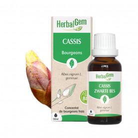 CASSIS - 50 ml   Inula